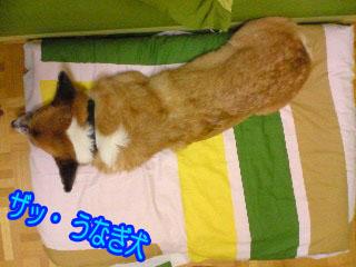うなぎ犬~03.jpg