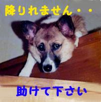 おりれなぁ〜いつ.jpg