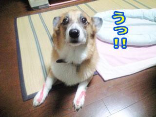 たまらんち~01.jpg