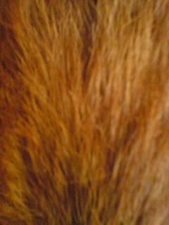 どこの毛だぁ〜~01.jpg