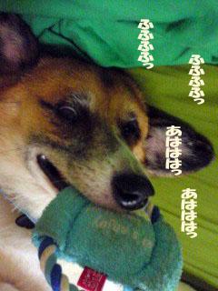 企む犬~02.jpg