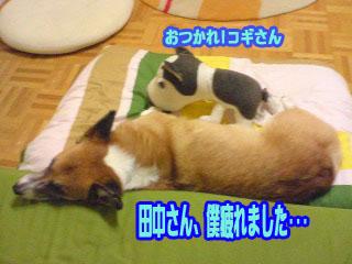 寝るコギ01.jpg