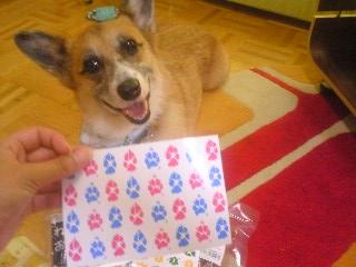 肉球ポストカード02.jpg