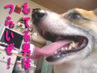 僕はもてもて〜~01.jpg