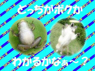 kogiko-gikogi 1.jpg