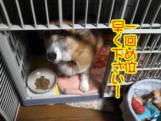 1かいめのしょくじ風景~01.jpg