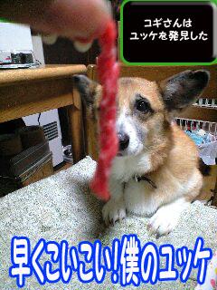 あぁ〜愛しのユッケさま~0002.jpg
