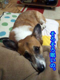 あのね、眠いの~01.jpg