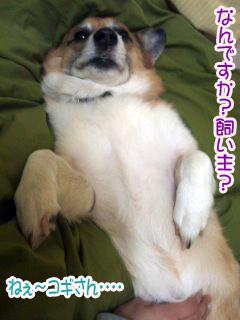 う〜んおさきにおやすみです〜~02.jpg
