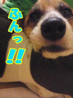 うししし~02.jpg