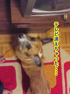 えへへへ偶然なのよ~01.jpg