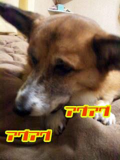かみ締めるコギさん~03.jpg