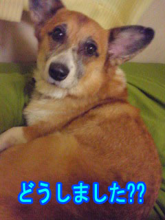 ねむねむこぎさん~02.jpg