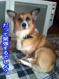 びびり〜コギさん~02.jpg