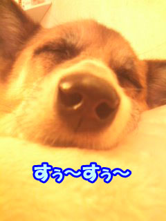 ふすぅ〜ふすぅ〜2.jpg