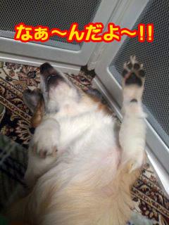 ふてくされ犬コギ〜ン~03.jpg