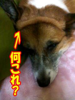 ぶよぉ〜〜ん~01.jpg