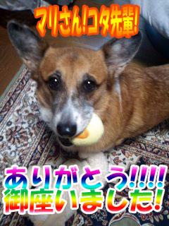 まりさんコタ王!ありがとうです!~02.jpg