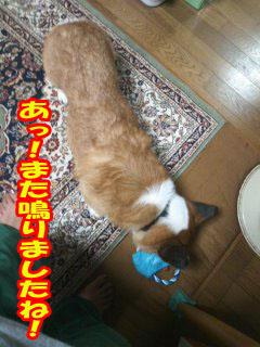やっぱくれない~03.jpg