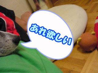 らいおん丸とアゴ~01.jpg