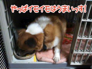 イモいもを食すこぎ~03.jpg