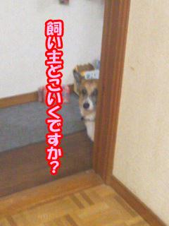 コギさんは見た~01.jpg