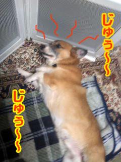 コギ焼き.jpg