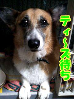 ティ〜ズです~01.jpg
