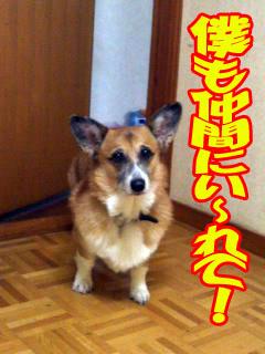 ネェ〜ってば!!!~01.jpg