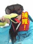 ヘビ捕獲~02.jpg