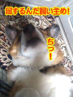 何をしやがる飼い主め~02.jpg