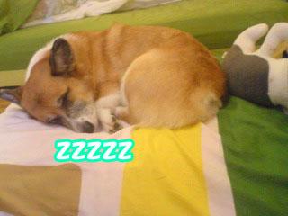 寒い眠いねむ・・い~01.jpg