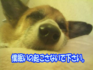 起こさないで下さい~01.jpg