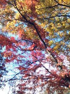 山の紅葉~01.jpg