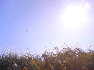 秋晴れ~01.jpg