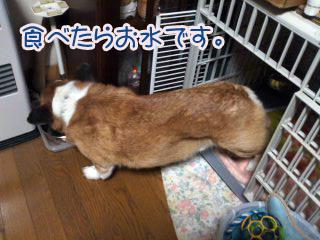 食べたらお水03.jpg