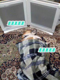 寝る犬1~01.jpg