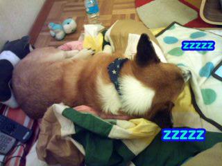 寝る犬2~01.jpg
