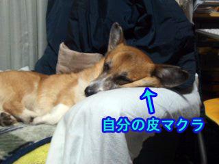 寝る犬3~01.jpg