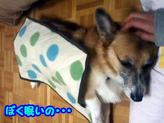寝る犬401.jpg