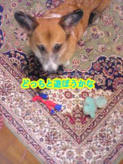 悩むいぬ~02.jpg