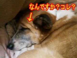 皮なのか肉なのか~01.jpg